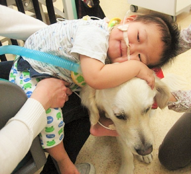 ファシリティドッグによる入院中の子どもの心のケア